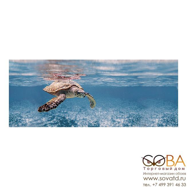 Декор Ocean Turtle  20x50 купить по лучшей цене в интернет магазине стильных обоев Сова ТД. Доставка по Москве, МО и всей России