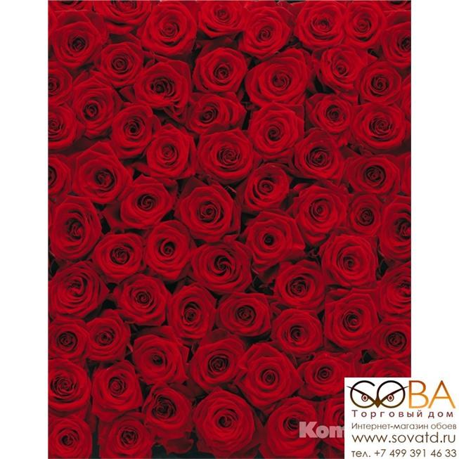 Фотообои Komar Roses артикул 4-077 размер 194 x 270 cm площадь, м2 5,238 на бумажной основе купить по лучшей цене в интернет магазине стильных обоев Сова ТД. Доставка по Москве, МО и всей России