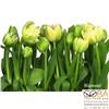 Фотообои Komar Tulips артикул 8-900 размер 368 x 254 cm площадь, м2 9,3472 на бумажной основе, интернет-магазин Sportcoast.ru