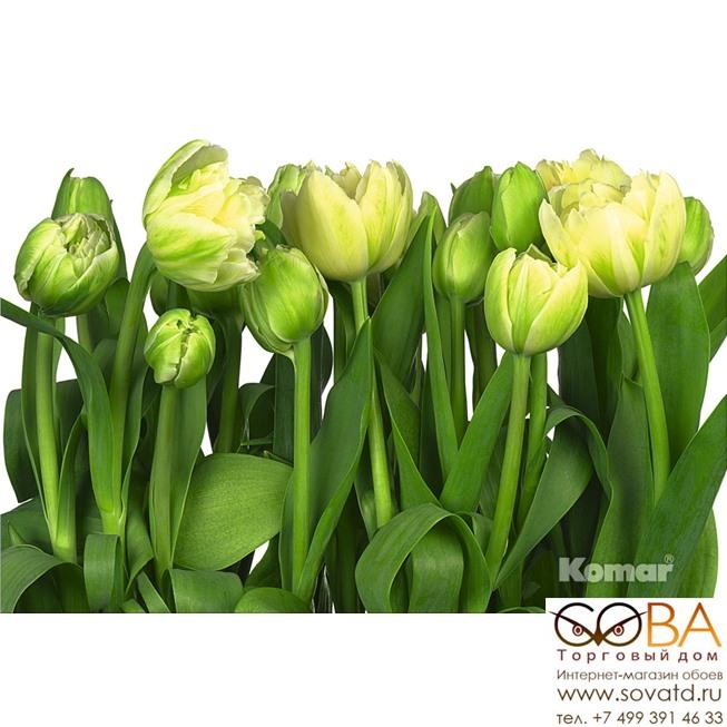 Фотообои Komar Tulips артикул 8-900 размер 368 x 254 cm площадь, м2 9,3472 на бумажной основе купить по лучшей цене в интернет магазине стильных обоев Сова ТД. Доставка по Москве, МО и всей России